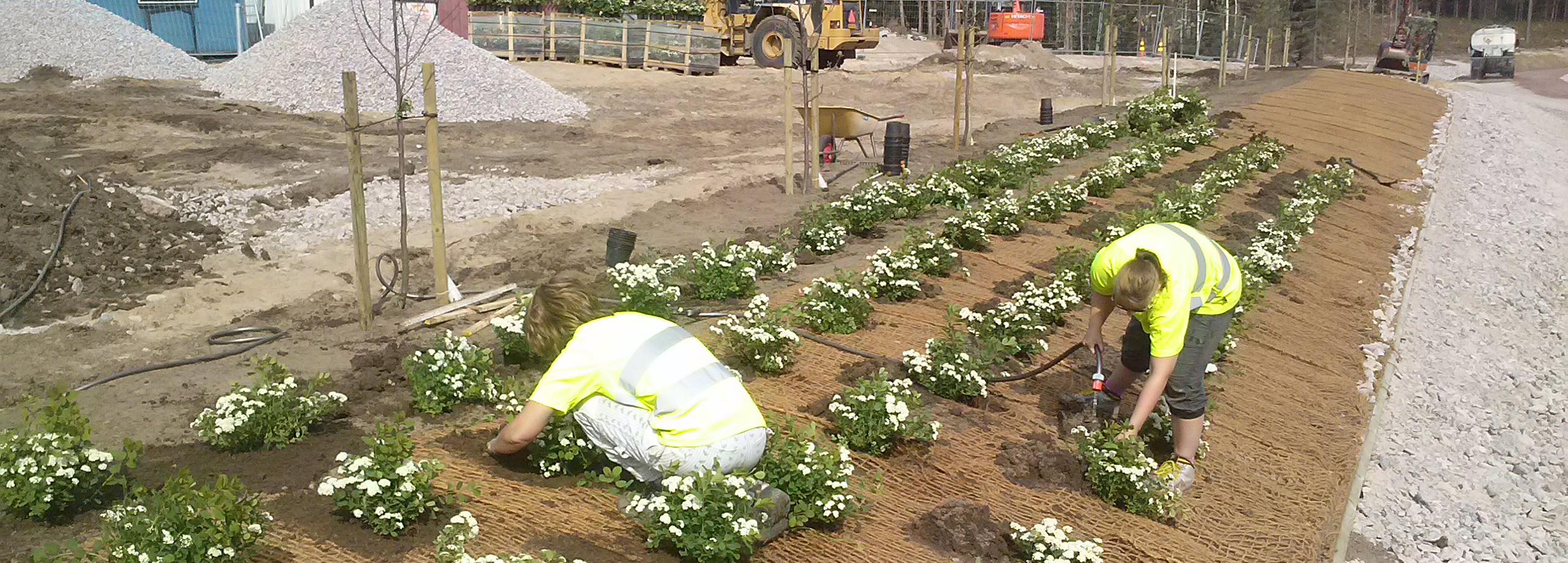 Massplantering vid vägbygge
